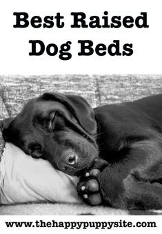 Caring For Sick Dogs at Home How To Take Care Of A Sick Dog At Home / All about dog health and medication. How to keep your dog healthy, happy and disease-free. Dog health tips. Dog Health Tips, Dog Health Care, Health Talk, Puppy Care, Pet Care, Big Dog Beds, Pet Beds, Raised Dog Beds, Dog Illnesses