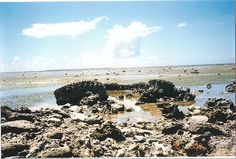 White Beach one (Peleliu Island) The Track off a tank out in the tidal zone.