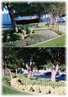 Becoming Lawns Commercial Lawn Care Services in Fort Worth and Arlington