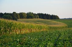 Bois des Dames champs en été Champs, Vineyard, Photos, Nature, Outdoor, Gardens, Picasa, Woodwind Instrument, Outdoors