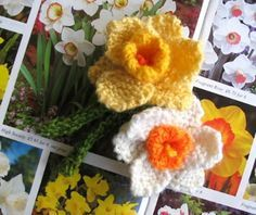 A host, of knitted daffodils... well two of them anyway