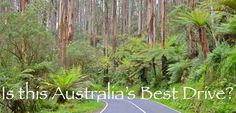 Australia's Best Drive? The Black Spur - drive between Marysville and Healesville (VIC)