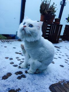 We recently relocated to Europe with our cat he has never seen snow before. That was his reaction(x-post r/aww)