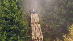 Samodzielne pozyskiwanie drewna   ante grupa