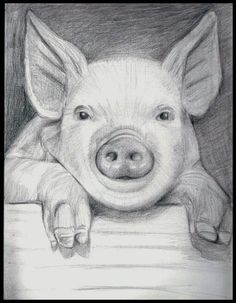 I raise these little pigs and am always looking for pig stuff. Let me know if you have anything!! TY Also can I buy this?