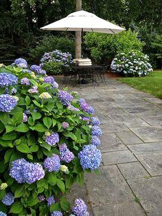 hydrangea via Quintessence Garden Design Pictures, Home Garden Design, Garden Paths, Garden Tools, Garden Ideas, Dog Friendly Backyard, Outdoor Landscaping, Shade Garden, Garden Styles