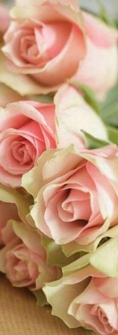 My Flower, Flower Power, Flower Boutique, Pin Logo, Garden Club, Love Rose, Rose Cottage, Pretty Pastel, Tropical Flowers