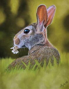 Art Print of a cute bunny! High quality art print of my pastel painting of a cute bunny eating flowers! Surrealism Painting, Cute Bunny, Animal Prints, Paper Size, Original Artwork, Fine Art Prints, Pastel, Horses, Drawings