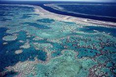 Gran Arrecife de Coral (Australia) La Gran Barrera de Coral es el mayor arrecife de coral del mundo. Se encuentra situado frente a la costa de Queensland en el mar de Coral. El arrecife, que se extiende sobre unos 2600 kilómetros de longitud, puede ser distinguido desde el espacio. La Gran Barrera de Coral es mencionada a veces como el ser animal vivo más grande del mundo con casi 35 millones de hectáreas. Fue declarado Patrimonio de la Humanidad en 1981.