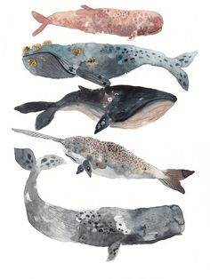 Five Whales Stacked - Archival Print - Illustration - Watercolor Art And Illustration, Fuchs Illustration, Illustrations, Watercolor Whale, Watercolor Paintings, Whale Painting, Painting Art, Salt Watercolor, Arte Sketchbook