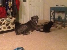 Beasties...Marley and Jangle Leg for life!
