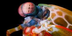 The compound eyes of a Mantis Shrimp can detect cancer and the activity of neurons because they are sensitive to detecting polarized light that reflects differently from cancerous and healthy tissue.