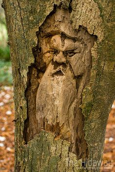 Carvings in a dead tree stump at Tehidy country park, Cornwall