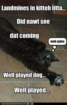 Funny Dogs Without Words 1000+ images ab...