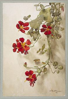 """A. Renaudin. Nasturtiums. From the album """"The Gold Book of Lorraine."""" 1893. Watercolour."""