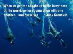 busy-ness Jack Kornfield, Originals, Business, Animals, Animales, Animaux, Animal, Store, Animais