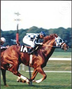 SECRETARIAT & RON TURCOTTE - ORIGINAL 1973 8X10 MAN O' WAR STAKES PHOTO! in Sports Mem, Cards & Fan Shop, Fan Apparel & Souvenirs, Horse Racing | eBay