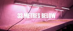 '33 Metres Below: Growing Underground'. Deep under the surface of London, herbs and micro-herbs are grown.