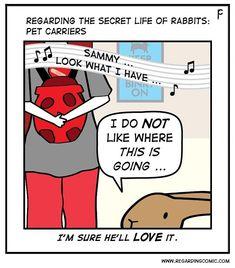 Bunny Meme, Funny Bunnies, Cute Bunny, Funny Rabbit, Pet Rabbit, Bunny Art, Bunny Bunny, Secret Life Of Rabbits, House Rabbit