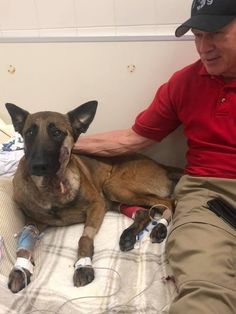 Nero is still receiving 24 hour Law Enforcement protection. Peter McClelland remains by Nero's side and we are so grateful to him. Love and Hugs Nero - You are a HERO. Military Dogs, Police Dogs, All Hero, Love Hug, Belgian Malinois, American Soldiers, Blue Life, Service Dogs, Working Dogs