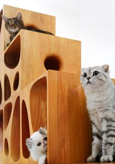 LYCS architecture has designed a new CATable made especially for our furry friends. It is no longer a proper table, like the previous CATable but a series of four wooden cubes. Rustic Cat Furniture, Trendy Furniture, Pet Furniture, Modular Furniture, Colorful Furniture, Furniture Making, Multifunctional Furniture, Cat Cube, Modular Table