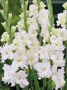 18 Flores de primavera papel dado corta tarjeta Topper Narciso Tulipán CAMPANILLA Blanca Margarita Hyac