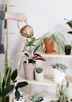 Indoor Garden Ideas - DIY Plant Holders   Apartment Therapy
