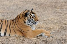 Photo by Aaron Goodwin, Tulsa Zoo.