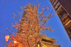 中目黒の夜桜写真を12枚まとめてみたよ! - A LA CARTE