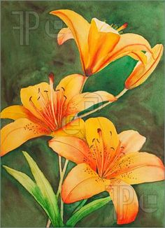 Picture of An original, watercolor painting of Saskatchewan's provincial flower, the tiger lily.