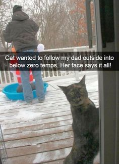 Hilarious Animal Pictures Picdump of The Day 172 Pics Here is a hilarious funny animal picture picdump Most of it consists of cute animals doing funny things. Some funny animal fails. Anyway, check out these 30 funny pics of funny animals. Funny Animal Memes, Funny Animal Pictures, Cute Funny Animals, Funny Memes, Funny Sayings, Cute Animal Humor, Hilarious Pictures, Memes Humor, Videos Funny