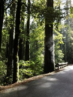 misting redwoods in northern California
