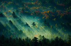 Sun rays illuminate a foggy forested area in the Conway valley, New Hampshire. I was up on Cathedral Ledge looking down on this sight. :-)