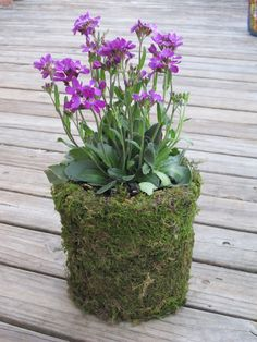 Yogurt Container into a Moss Planter