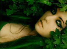 Fairy glamore