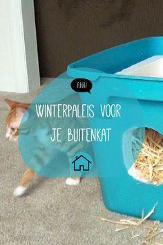Houd je kat warm deze winter!