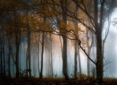 Autumn in the Woods - null