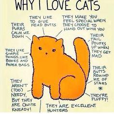 #cats butt stars lol