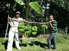 Los Cacaos de San Cristóbal