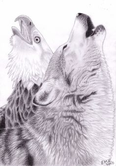 Realistic Eagle Drawing | The Cry of the Wolf and Eagle by Elkenar
