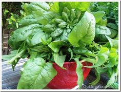How to build raised vegetable garden. Easy steps to build yourself!