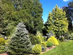 Garden Design With Conifers Designing With Conifers American Conifer Society Conifer Trees, Trees And Shrubs, Pinterest Garden, Low Maintenance Landscaping, Plantar, Front Yard Landscaping, Landscaping Ideas, Horticulture, Amazing Gardens