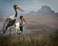 Art of Birds – Les superbes photographies d'oiseaux de Cheryl Medow (image)