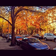 Park Slope autumn.