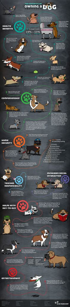 Benefits of Owning A Dog | Infographic Styles
