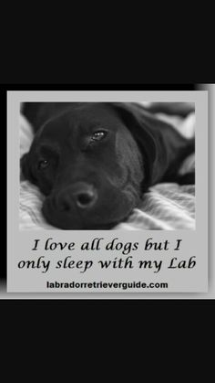 Mind Blowing Facts About Labrador Retrievers And Ideas. Amazing Facts About Labrador Retrievers And Ideas. Black Labrador Retriever, Labrador Retrievers, Funny Dogs, Cute Dogs, Black Lab Puppies, Corgi Puppies, Puppy Classes, Golden Puppy, Dog Rules