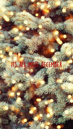 Christmas Time Is Here, Christmas Mood, Diy Christmas Tree, Merry Little Christmas, Christmas Photos, Christmas Decorations, Christmas 2019, Christmas Fairy Lights, Disney Christmas