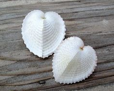 6 large Heart Cockle seashells 152 in by SeaSideStore on Etsy, $4.50