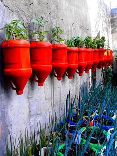 Red Milk Jugs planters