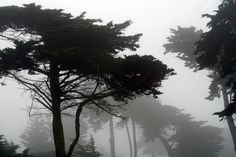 https://flic.kr/p/tD6HT   Sutro Park Fog   San Francisco